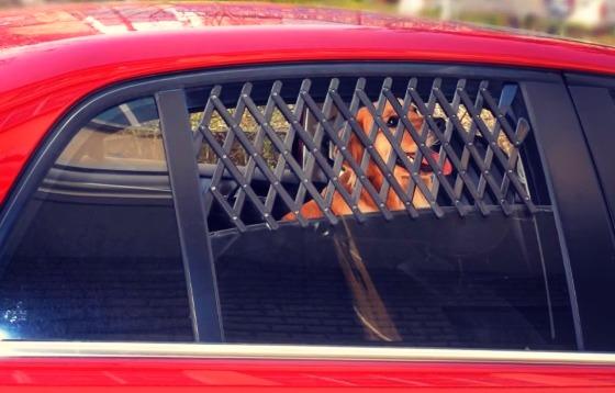 Сетка для собаки в авто
